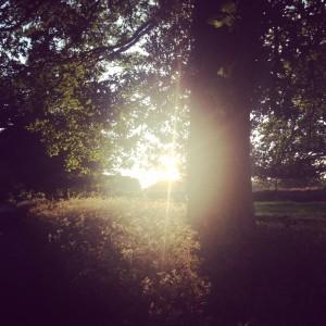 Cowslip sunshine